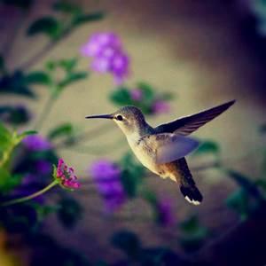 1835 bästa bilderna om Beautiful Birds på Pinterest ...