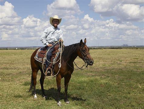 wichtige tipps fuer urlaub mit dem pferd ehorses magazin