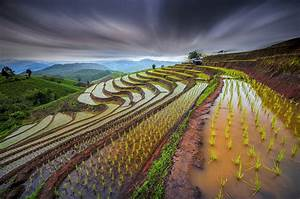 Wallpaper rice field, Thailand, water, sprout, slope ...