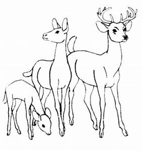 Realistic Whitetail Deer Coloring Pages On White Tailed