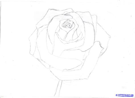 draw  rose  pencil draw  realistic rose step  step