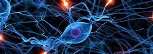 Neuroscience Talk May Be Literally Re