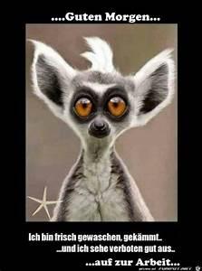 Lustiges Bild Wochenende : die besten 25 witzige guten morgen bilder ideen auf pinterest guten morgen bilder spr che ~ Frokenaadalensverden.com Haus und Dekorationen
