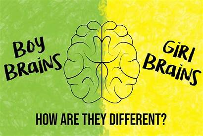Boy Brains Difference Differences Between Momentous Institute