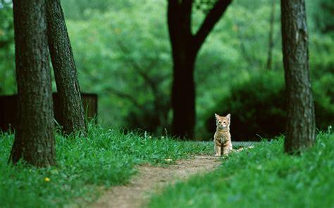 Green Animal Wallpaper - cat animals nature feline park green trees grass