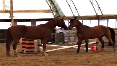 funny social smart horses playful horse spirit