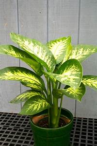 Pflege Von Zimmerpflanzen : zimmerpflanzen pflege welche pflanzen gut zu ihrem haus passen ~ Markanthonyermac.com Haus und Dekorationen