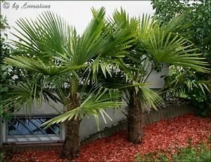 Palmen Für Draußen : palmenstammtisch i treffpunkt stammtisch green24 ~ Michelbontemps.com Haus und Dekorationen