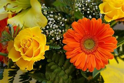 Yellow Roses Orange Wallpapers Rose Flowers 3all