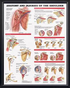 Pin On Doctors Anatomy Posters