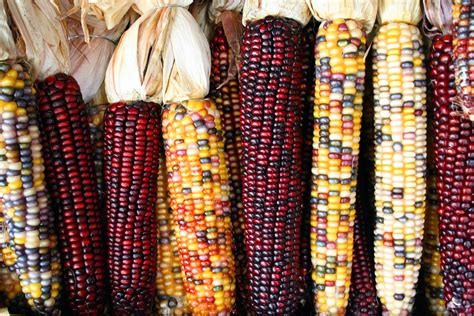 this is glass gem corn it is not photoshopped it is a real variety of corn pics