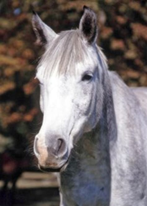 spotting signs  equine depression  horse owners
