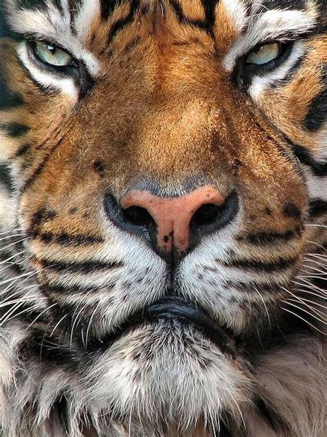 Wild Cats Handsome Amazing World Beautiful
