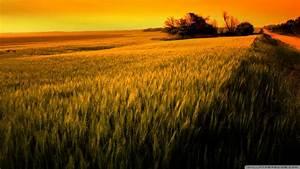 Sunset Over Wheat Field wallpaper - 1001378