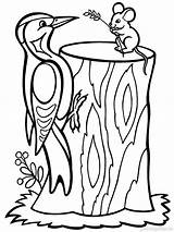 Coloring Pages Woodpecker Birds Printable Woodpeckers Template Gila Colors Recommended sketch template