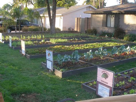 front yard vegetable garden design 5 ways to a greener and safer neighbourhood it all starts with you better housekeeper