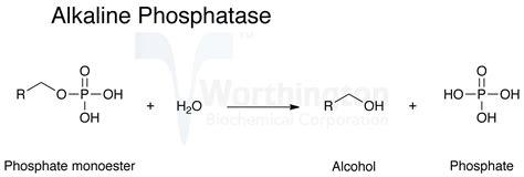 alkaline phosphatase causes symptoms treatment alkaline phosphatase