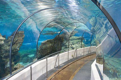 aquarium barcelona un voyage au milieu des requins de voyage ebookers ch