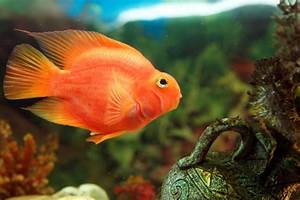 Top 3 Types of Cichlids | eBay