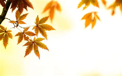 Artsy Fall Computer Backgrounds by Artsy Desktop Backgrounds Wallpaper Cave