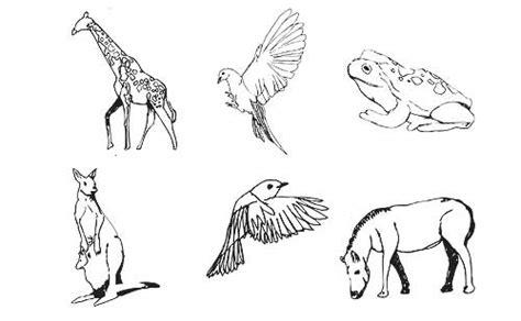 drawing animals pneps visual arts