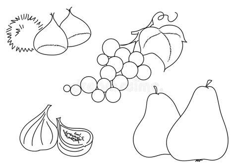 clipart castagne pere delle castagne fico dell uva di bw illustrazione