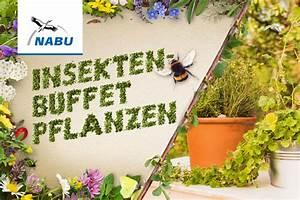 Was Kann Man In Ein Gewächshaus Pflanzen : anleitung insekten nisthilfen selbst bauen nabu ~ Lizthompson.info Haus und Dekorationen