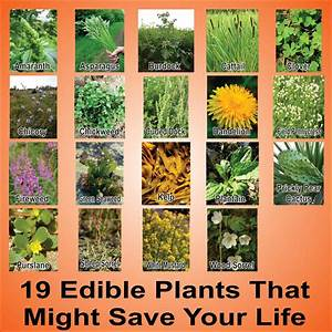 A, Huge, List, Of, Edible, Plants, And, Weeds, For, Survival
