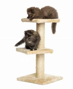 Arbre A Chaton : arbre chat pour chaton ~ Premium-room.com Idées de Décoration