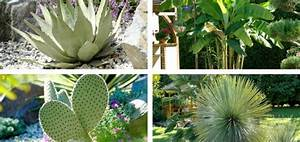 Plantes Exotiques Rustiques : plante exotique jardin pivoine etc ~ Melissatoandfro.com Idées de Décoration