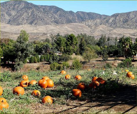 Fresno Pumpkin Patch by Find California Pumpkin Patches For Fall Fun
