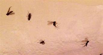 tiny flying flies are taking over my bathroom sheffield