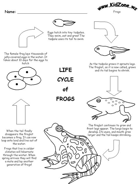 Life Cycle Of A Frog For Kids Kids