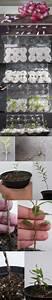 Bonsai Stecklinge Machen : 102 besten setzlinge bilder auf pinterest garten pflanzen gartenideen und setzlinge ~ Indierocktalk.com Haus und Dekorationen
