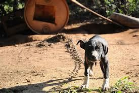 tampa bay authorities bust dog fighting ring life  dogs
