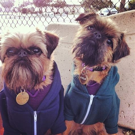meet the real ewoks and gizmos of the world the
