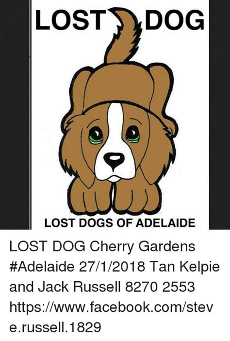 Lost Dog Meme - lost dog lost dogs of adelaide lost dog cherry gardens adelaide 2712018 tan kelpie and jack