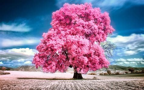 sky clouds pink summer beauty beautiful tree nature