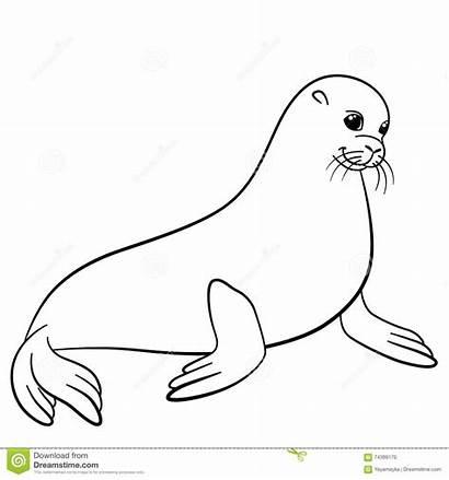 Seal Coloring Fur Drawing Smiles Cheerful
