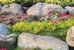 Pflanzen Für Steingarten : pflanzen zryd stein garten ag ~ Michelbontemps.com Haus und Dekorationen