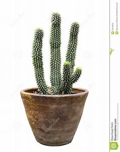 Pot A Cactus : cactus in flower pot isolated stock photo image of tropical flowerpot 47079378 ~ Farleysfitness.com Idées de Décoration