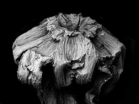 intriguing photographs  decaying plants shot