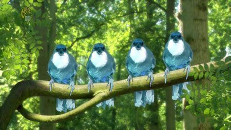 Tittifers In The Garden - in the garten blue birds song