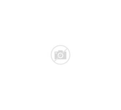 Leaves Transparent Plant Leaf Leave Shapes Purepng