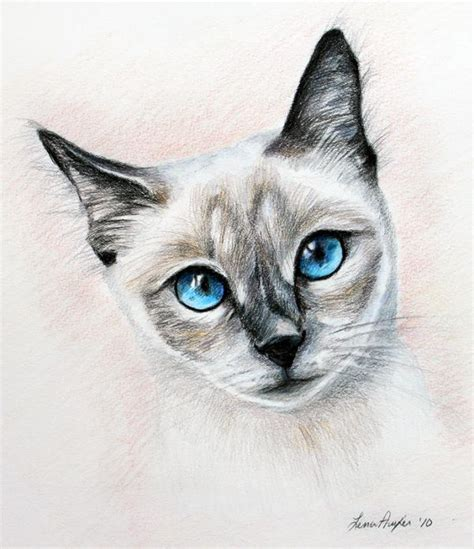 blue eyes    art pencil drawings colored