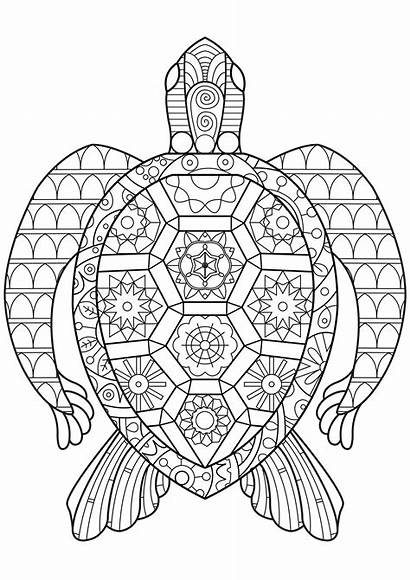 Coloring Reptile Turtle Pattern Zen