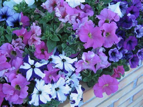 all season flower plants perennials that bloom all season 28 images short perennial flowers that bloom all summer