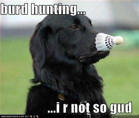 bird dogs quail hunting images  pinterest