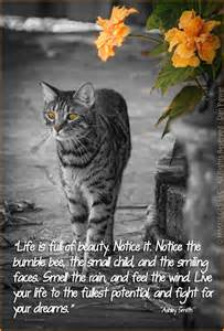 cat memory not just cats seat belts and memorial