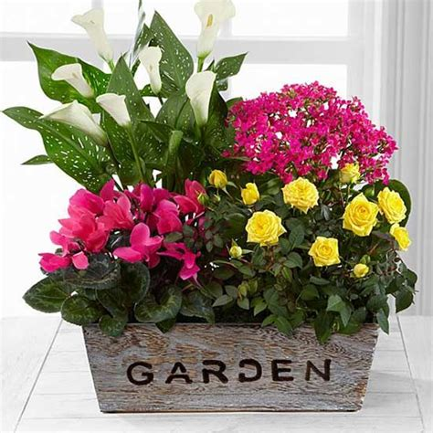 Maybe you would like to learn more about one of these? Fresh Floral Picks from Better Homes & Gardens Flowers by ...